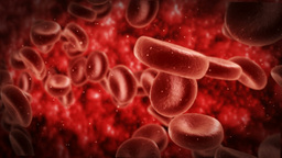 Blood Cells stock footage