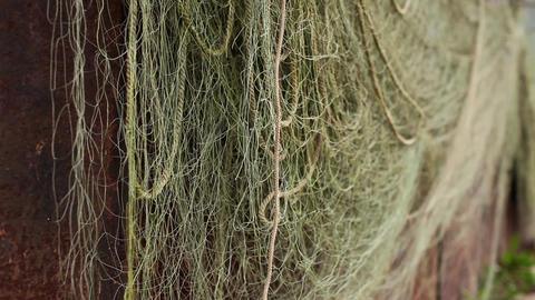 fishing nets Stock Video Footage