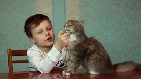 Boy  Plays  With  Cat  1 stock footage