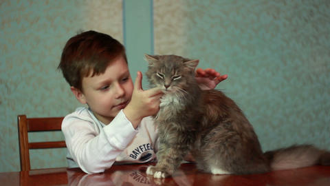 Boy plays with cat 1 Stock Video Footage