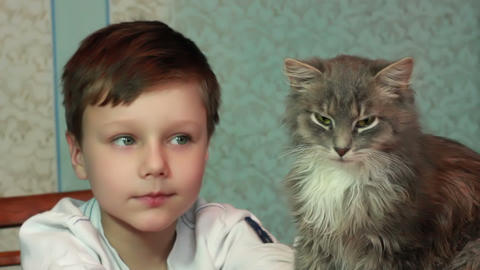 Boy plays with cat 2 Stock Video Footage