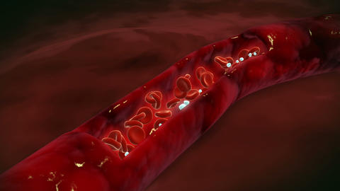 Cutaway view of red and white blood cells inside bloodstream Animation