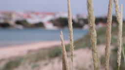 Beachgrass with beach in the background unfocused, slider shot Footage