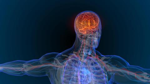3d rendered illustration of brain tumor and brain disease... Stock Video Footage