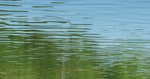 Green water forest reflection in river water Live Action