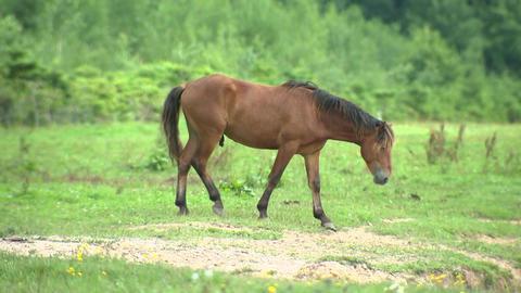 Excited horses walking on pasture, horse breeding and animal husbandry Live Action