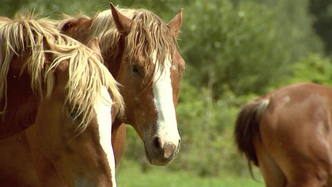 Brown horse on the background of green grass and forest shakes his mane, breeding horses Live Action