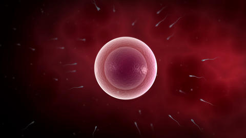 Visualization of common human fertilization Animation