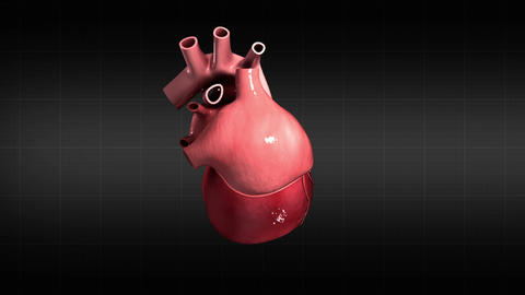 Human Heart Medical Animations