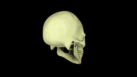 Rotating visualization of human skull Animation