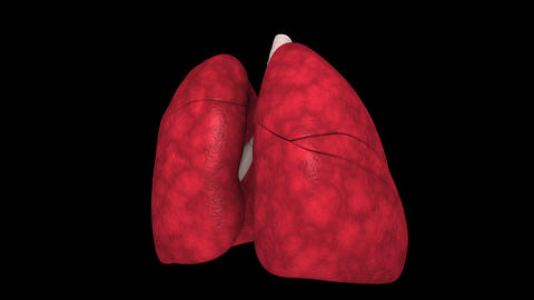 Rotating visualization of human lungs Animation