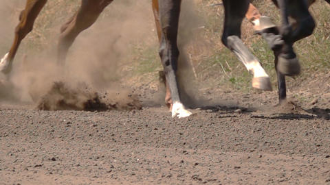 The Feet of the Horses at the Racetrack Live Action