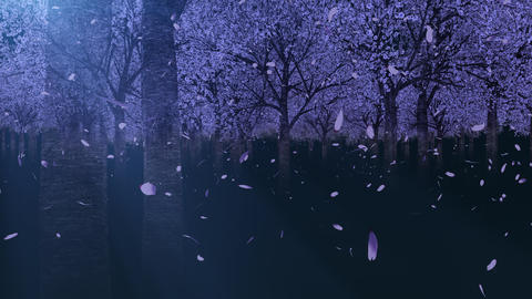 Going through the cherry forest _ loop _ night CG動画