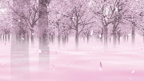 Going through the cherry forest _ loop _ 2 CG動画