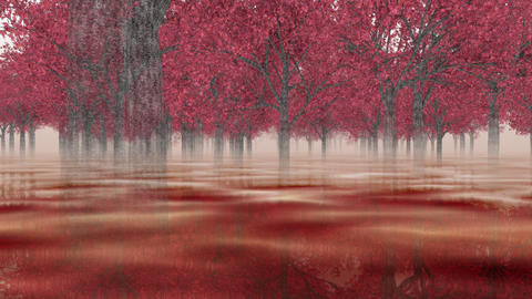 Going through the maple forest _ loop, red pond , reflection CG動画