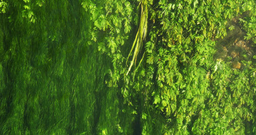 River with Aquatic Plants, Normandy, Real Time 4K Live Action