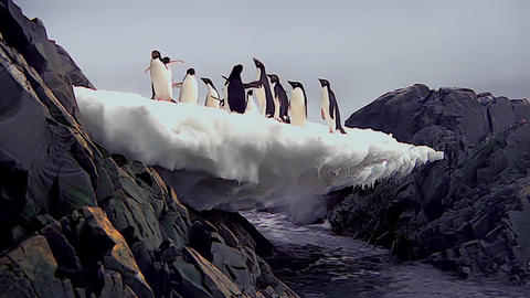 a Flock of Penguins Standing on The Piece of Ice That Hung Over the Water Footage
