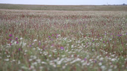 field with flowers on a cloudy day and windy Footage