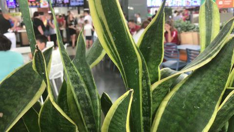 fast food restaurants, view through aloe flower Live Action