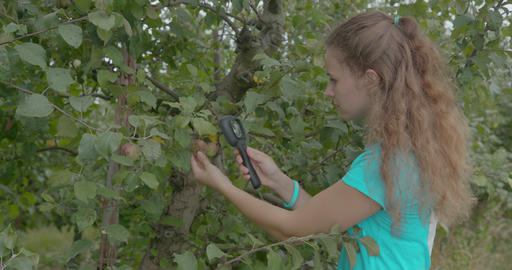 Biologist or agronomist, make an analysis of apple leaves Live Action