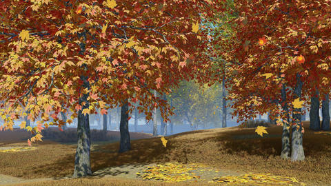 Maple trees with falling leaves in autumn park, Stock Animation
