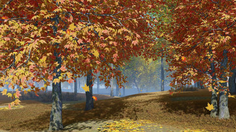 Maple trees with falling leaves in autumn park Animation