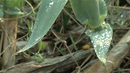 water droplets on leaves Footage