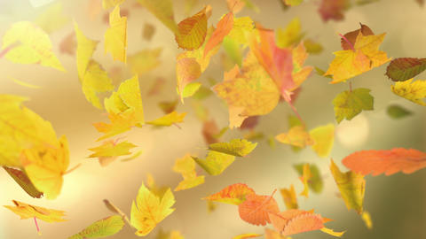 Falling autumn leafs loopable background in 4k Animation