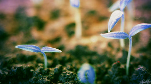 blue pepper plants growing, unearthy futuristic background design Live Action