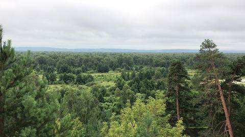Early morning russian forest, one point view Live Action