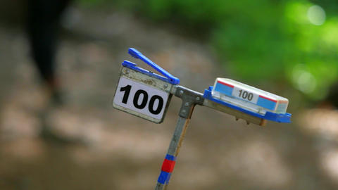 Orienteering training run. Sportsman or sportswoman come to electronical checkpoint use digital chip Live Action