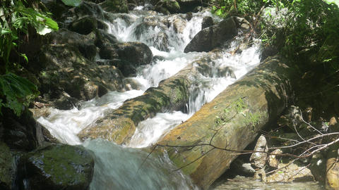 Waterfall and Mountain Stream in Green Forest Live Action