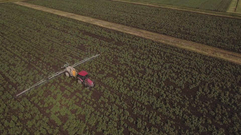 Tractor is spraying fertilizers potato field.Aerial video Footage