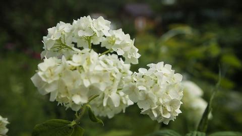 Beautiful white wildflower Footage