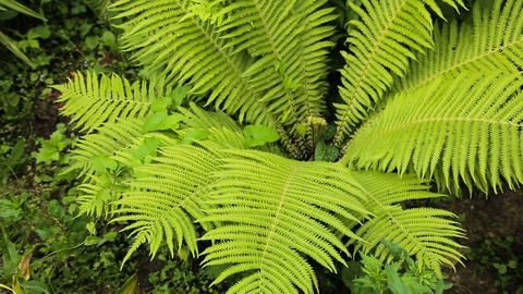 Green ferns in the forest Footage