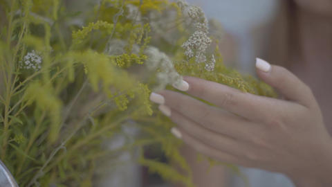 Close-up of tender female hand touching wild flowers. Rural lifestyle Live Action