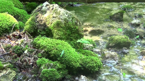 A large rock in the water with grass on it Live Action