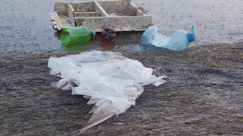 Dead seagull tangled in plastic bags among plastic bottles and rubbish. Plastic Footage