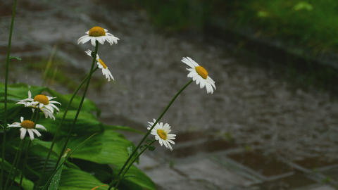 Summer rain in the village Footage