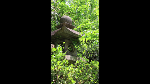 stone lantern Footage