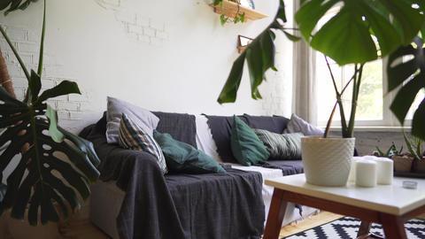 Cozy sofa in a Scandinavian interior, hygge concept Live Action