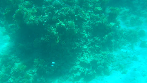 Sea bottom with corals Footage