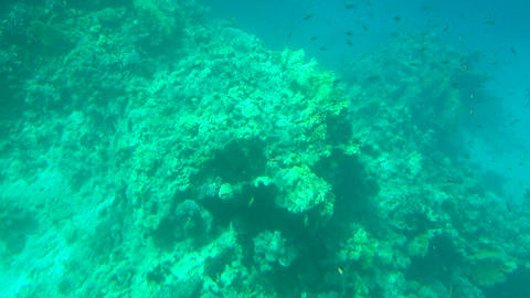 Sea underwater сoral reefs Footage