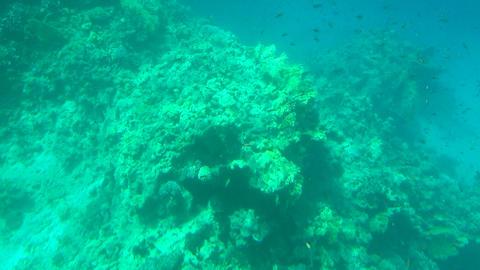 Sea underwater сoral reefs Footage