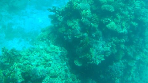 Coral reefs underwater and fishes Footage