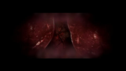 Heart and lungs iside the chest Animation