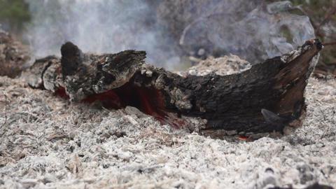Burning Stump Footage