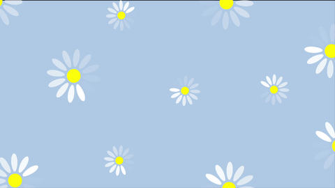 Summer camomiles flowers video animation Animation