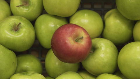 Closeup of a ripe red apple among green apples in the supermarket basket of a Live Action