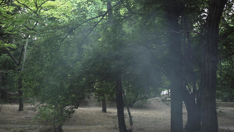 Smoke in the middle of a green forest. The concept of fire safety in the forest Live Action